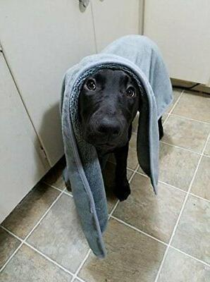 Dog Towels – of 2 in Cleaning, Grooming